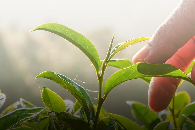 Tài liệu bảo vệ thực vật