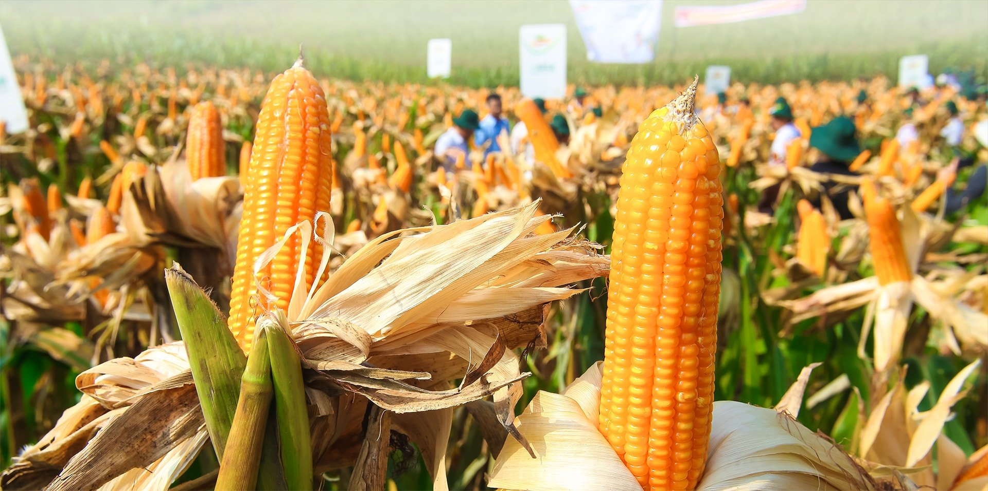 Bien doi gen - Thuc pham BĐG - GMO - CropLife Viet Nam