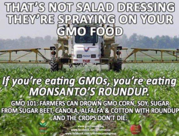 Tạm dịch nội dung: Đó không phải là sốt salad đâu – Họ đang phun thuốc trên thức ăn BĐG bạn dùng – Nếu bạn ăn thực phẩm BĐG , bạn dang ăn Roundup