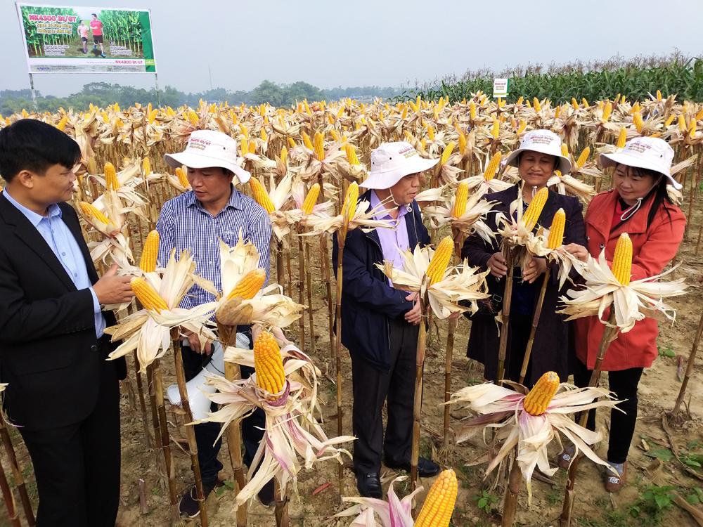 Chi cục Trồng trọt và Bảo vệ Thực vật (Sở NN&PTNT Thái Nguyên) cùng nông dân các xã tỉnh thăm quan mô hình trình diễn