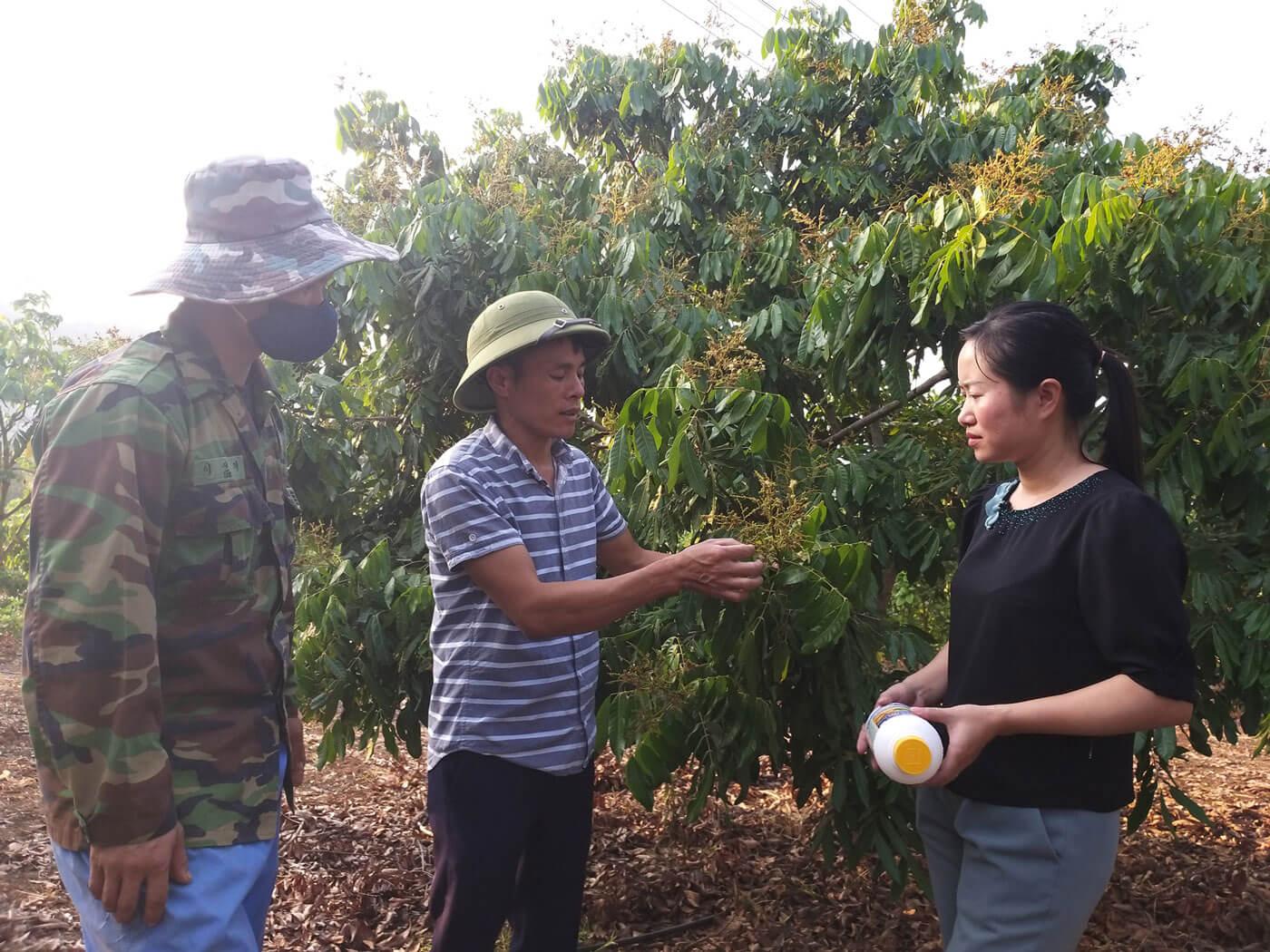 Cán bộ Chi cục Trồng trọt và BVTV tỉnh Sơn La hướng dẫn các thành viên của HTX Phương Nam ở xã Lóng Phiêng, huyện Yên Châu sử dụng thuốc BVTV 4 đúng, an toàn cho diện tích nhãn xuất khẩu.
