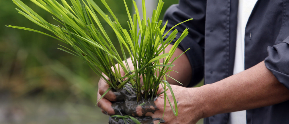Bảo vệ thực vật