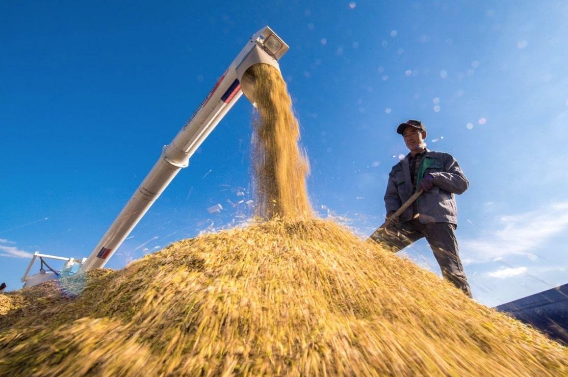 Một người nông dân đang phơi lúa tại Cát Lâm, Trung Quốc, năm 2018. An ninh lương thực châu Á phụ thuộc rất nhiều vào hàng triệu nông dân sản xuất nhỏ. Ảnh: Tân hoa xã
