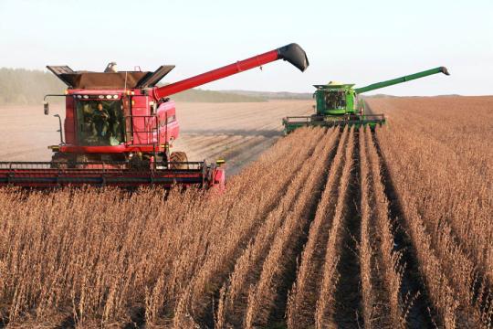 Ảnh 1: Thu hoạch đậu tương tại tỉnh Hắc Long Giang, Trung Quốc - Nguồn ảnh: Xinhua