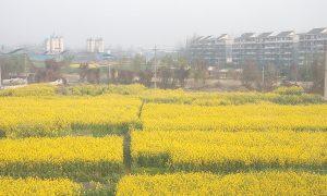 Trung Quốc thúc đẩy ứng dụng CNSH trong nông nghiệp