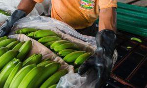 Điều gì sẽ xảy ra với nguồn cung thực phẩm nếu nông dân Mỹ không thể canh tác?
