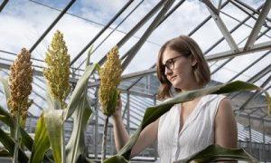 Nhiệt độ tăng, khí hậu khô hơn: Công nghệ CRISPR giúp việc ứng phó với biến đổi khí hậu
