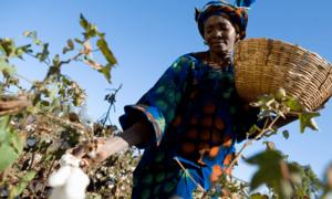 Công nghệ sinh học – Tương lai Nông nghiệp Kenya