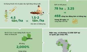 Thuốc trừ cỏ giúp giảm bớt làm cỏ thủ công ở châu Phi