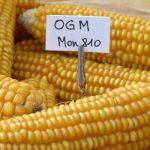 Cuba mở cửa cho cây trồng biến đổi gen nhằm giải quyết khủng hoảng lương thực