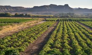 Cải tiến khoa học là giải pháp duy nhất giúp Châu Phi  đáp ứng được các nhu cầu về lương thực, khí hậu và môi trường