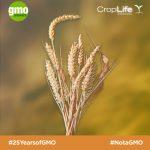 25 điều cần biết sau 25 năm tạo ra cây trồng biến đổi gen (Phần 2)
