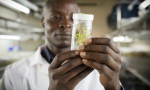 Đã đến lúc cần đặt niềm tin vào khoa học trong nông nghiệp