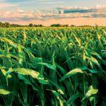 Nông dân chứng minh công nghệ sinh học là một lựa chọn cần thiết!