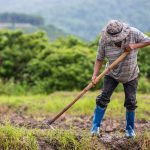 Hơn 68% nông dân ở 4 quốc gia Đông Nam Á khẳng định biến đổi khí hậu là thách thức chính đối với sản xuất lương thực